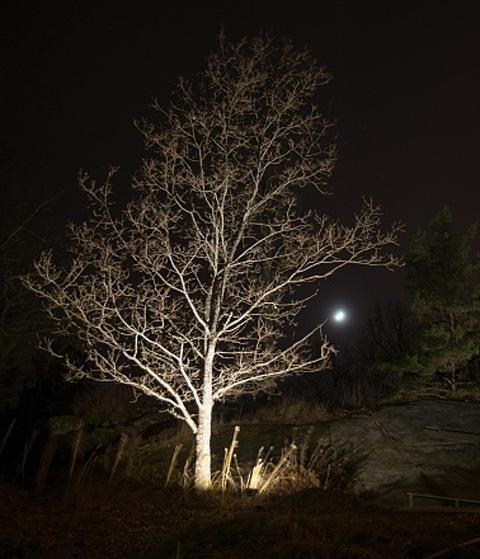 Belysa träd utomhus u2013 Vindskydd balkong