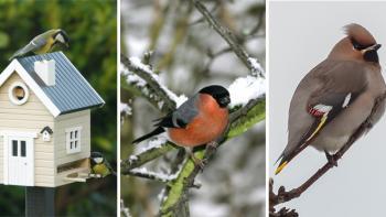 Så lockar du småfåglar till trädgården