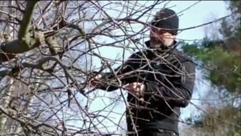 Verktyg när du beskär fruktträd