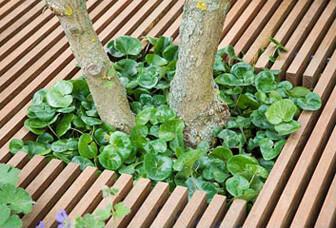Trädäck med inbyggd plantering