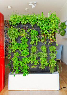 Växtvägg i kök