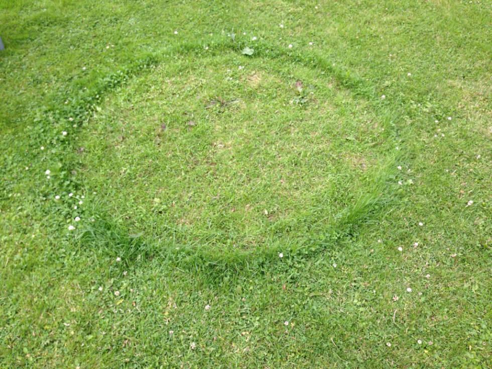 Häxringar i gräsmattan