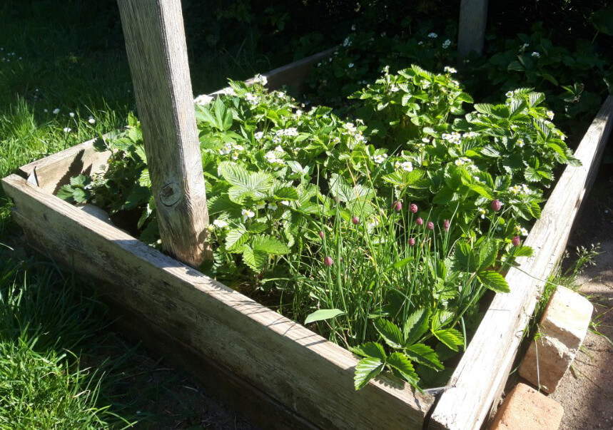Jordgubbar, smultron och gräslök