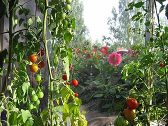 Bo i växthus