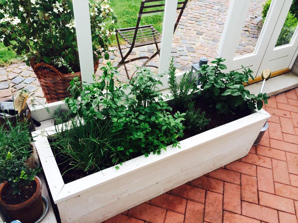 Upphöjda odlingslådor i ett växthus.