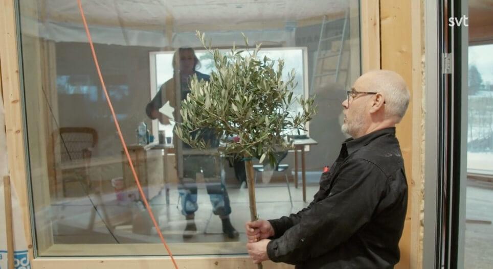 Planterar olivträd