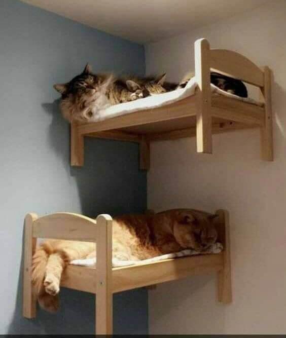 Kattsängar