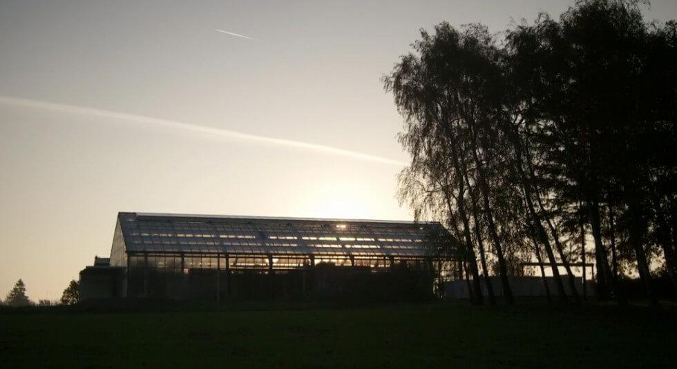 Kvällsbild på växthuset