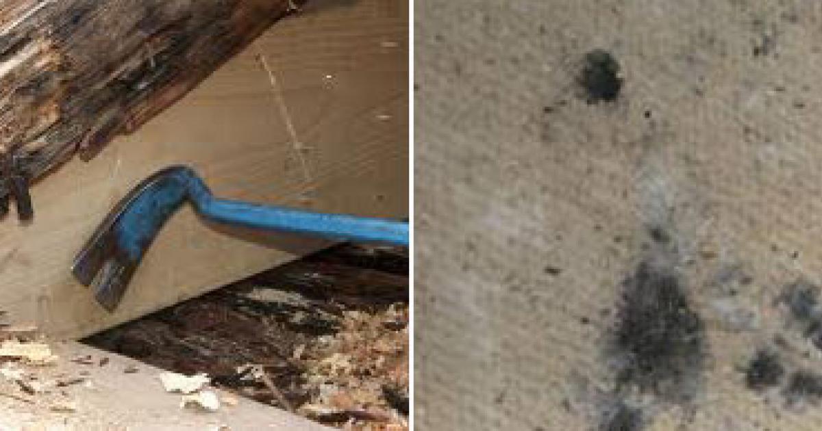 svartmögel farligt för hälsan