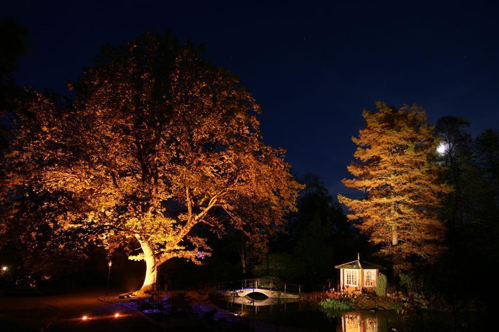 Så belyser du träd i trädgården u2013 steg för steg Byggahus se